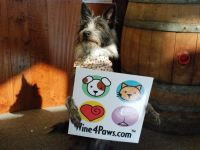 10th Annual Wine 4 Paws